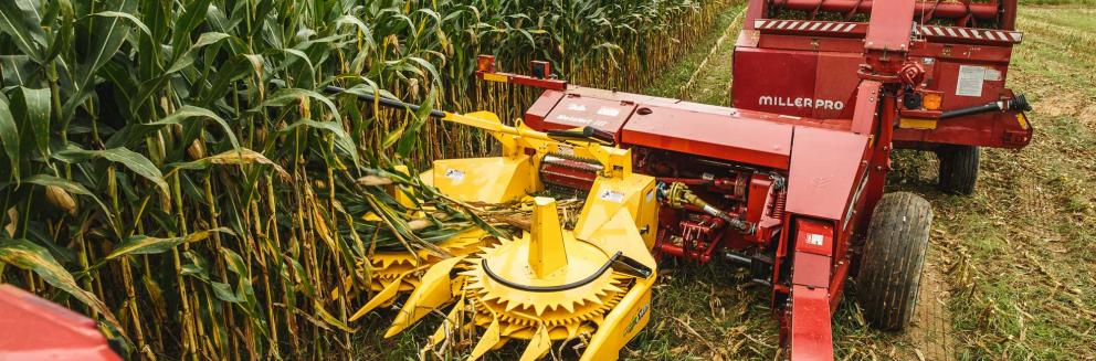 Closeup shot of Horning 3-row rotary corn head in action